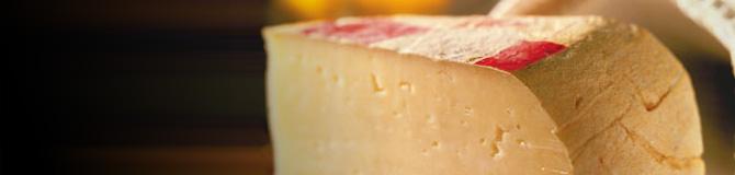 cheese bra dop