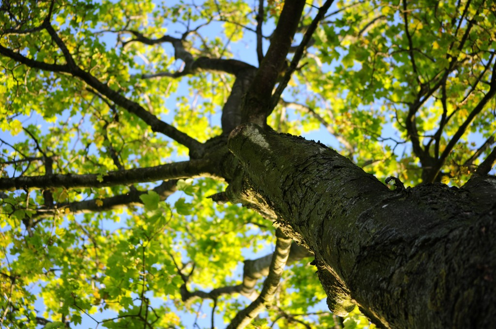 albero_natura_wood-nature-leaves-tree