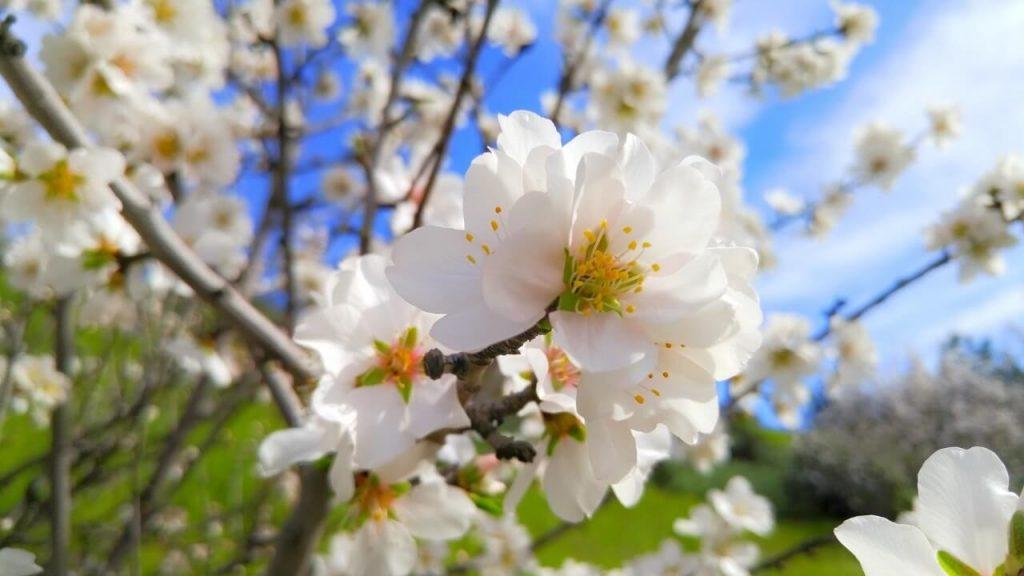 foto marzo